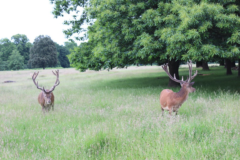Richmond Park, London / etdrysskanel.com