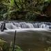 Purakaunui Falls - Catlins