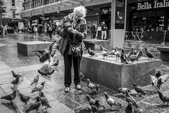 The Pigeon Whisperer