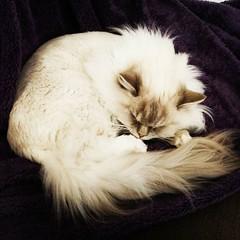 Och OJ, vad glad Wille blev över att jag kom hem tidigt idag! #kattvakt #nofucksgiven