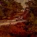 """<p><a href=""""https://www.flickr.com/people/131026809@N02/"""">Frédéric Fossard</a> posted a photo:</p>  <p><a href=""""https://www.flickr.com/photos/131026809@N02/48586365012/"""" title=""""Un Hiver en Forêt""""><img src=""""https://live.staticflickr.com/65535/48586365012_78eb8a7f1a_m.jpg"""" width=""""149"""" height=""""240"""" alt=""""Un Hiver en Forêt"""" /></a></p>  <p>Forêt de Fontainebleau en Île-de-France (Seine-et-Marne).<br /> Massif de l'Éléphant.</p>"""