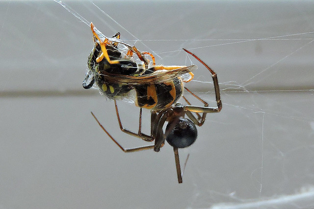 2019-08-20 Fighting Spider with Wasp