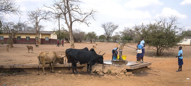 Zambia: Time for drinking for both two- and four-legged in the village
