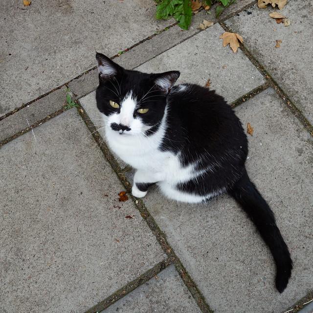 Black & White Cat, Handley Road, Hackney