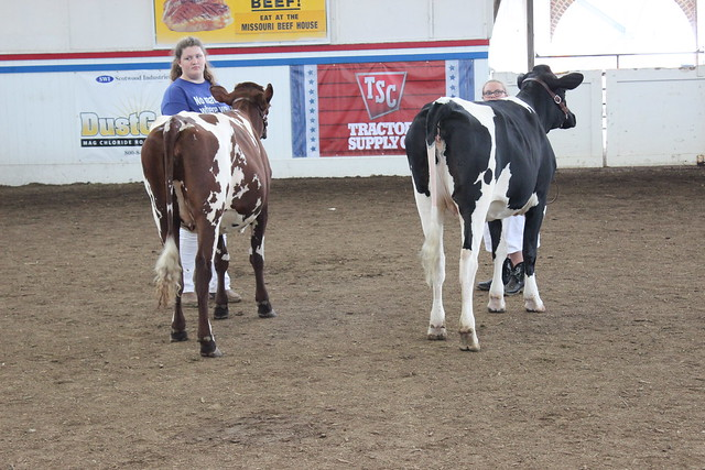 Youth Heifer Shows