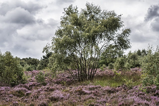 Heather Park, Bingley St Ives.