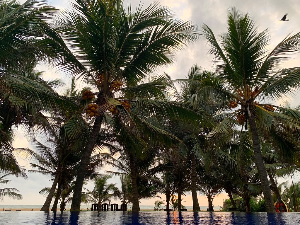 Sri Lanka 2019 492 Север Шри-Ланки Лучшие места для посещения в Северной Шри-Ланке 48587018272 1e15649a92 b