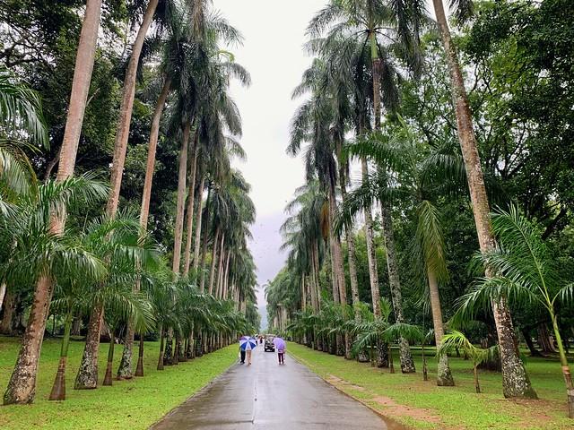 Sri Lanka 2019 315