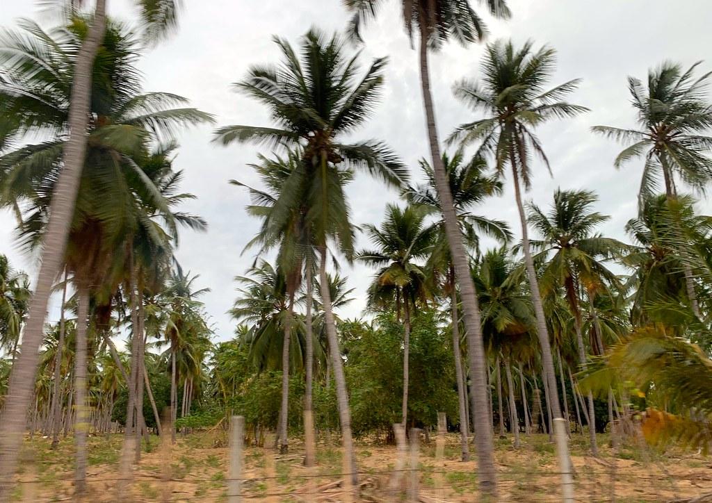Sri Lanka 2019 96 Север Шри-Ланки Лучшие места для посещения в Северной Шри-Ланке 48587226642 0c6deec1f1 b