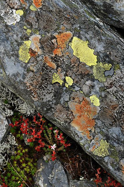Snowdonia lichens