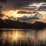 19. August 2019 - 20:57 - Nice trip out to Lackford Lakes with my PC yesterday. Bucket-fuls of insect repellant were applied, we saw kingfishers, herons, masses of cormarants, swans and ducks, but the grand finale was the beautiful sunset we witnessed