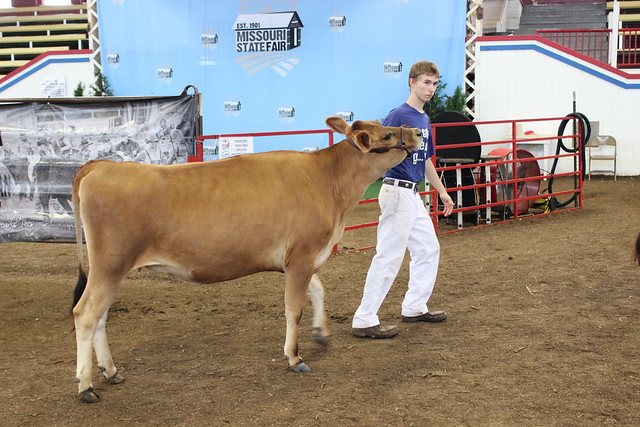 Youth Cow Shows