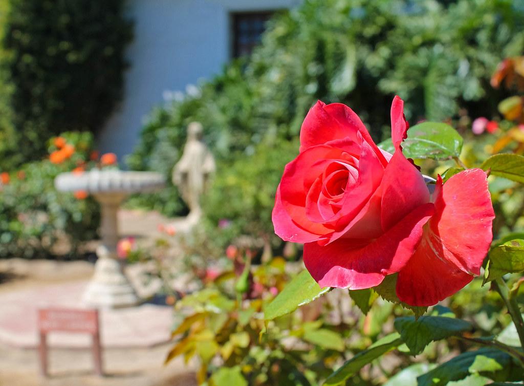 Soledad - Rose