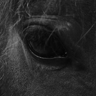 127/365. Eye of Pontus