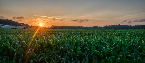 connecticut hdr nikon nikond5300 outdoor agriculture clouds corn cornfield evening farm geotagged rural sky summer sun sunburst sunset
