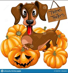 NEW! #Halloween #Dachshund #TrickorTreat #Cute #Cartoon #Character #Vector #Illustration :point_right: www.dreamstime.com/cute-happy-dachshund-dog-cartoon-character-surrounded-several-pumpkins-jack-o-lanterns-panel-haging-to-his-tail-text-image156387061
