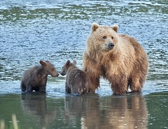 """""""Blonde Mom"""" and her spring cubs (EXPLORE)"""