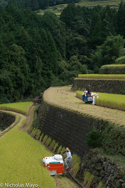 Rice Harvesters On The Terraces