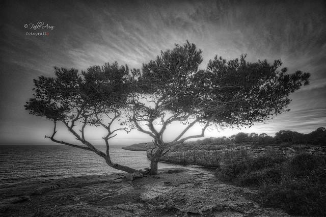 (214/19) Los caprichos del viento