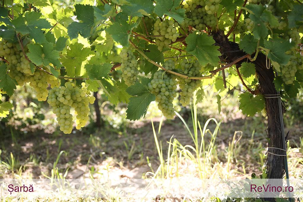 Romanian viinit