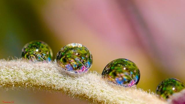 Droplets - 7272