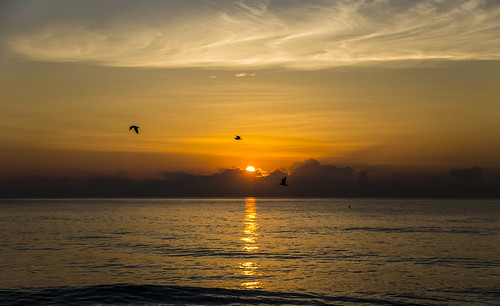 canon6d sunrise landscape sea ocean atlantic sun silhouettes bird nature outdoors outside usa florida
