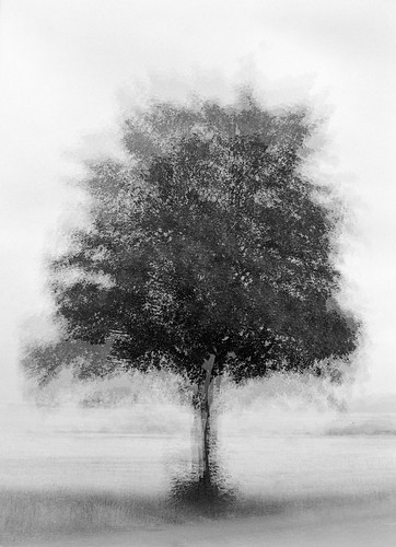 Multi-expo: Solitary Tree | by LarsHolte
