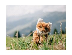 Foxi in the Mountains