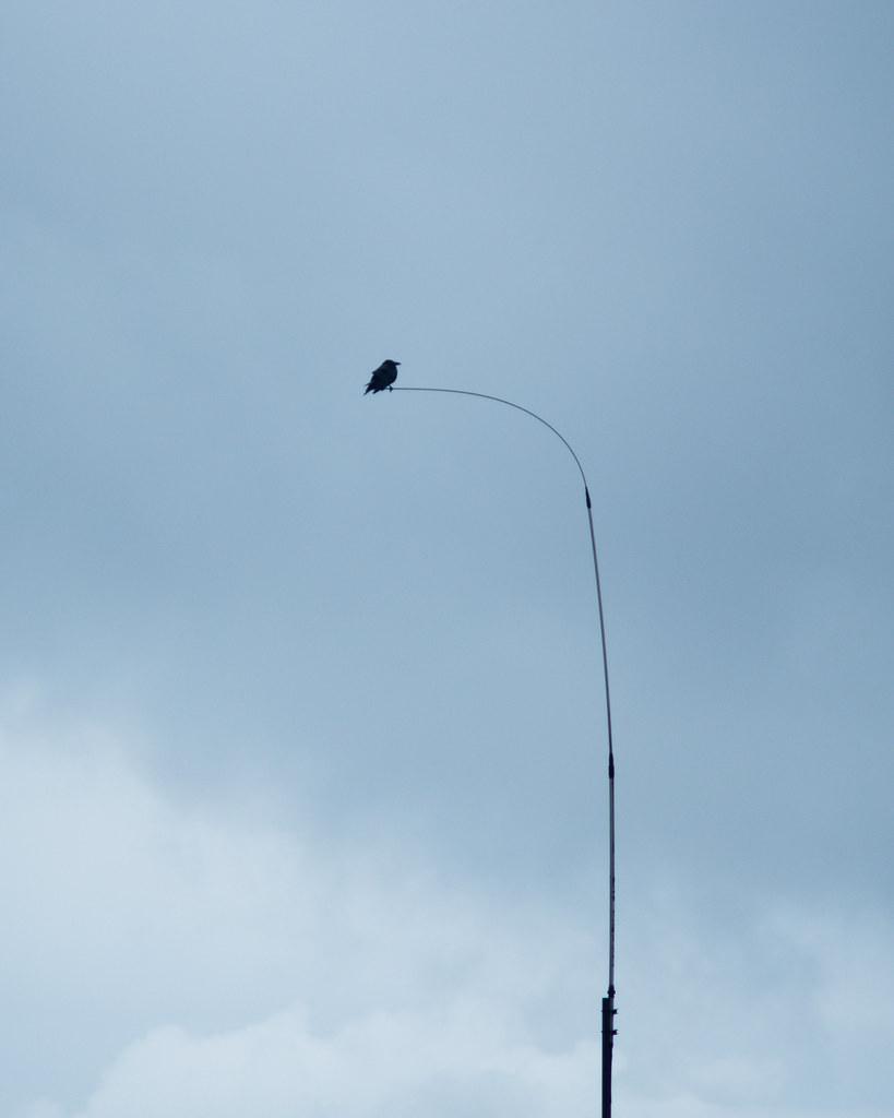 Bird on bent antenna
