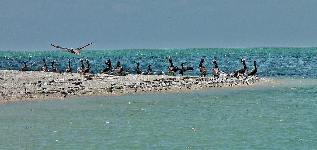 MEXICO, Yukatan, Am Golf von Mexiko,  Isla Aguada -Laguna Terminos, Vogelparadies, serie, 19216/11889