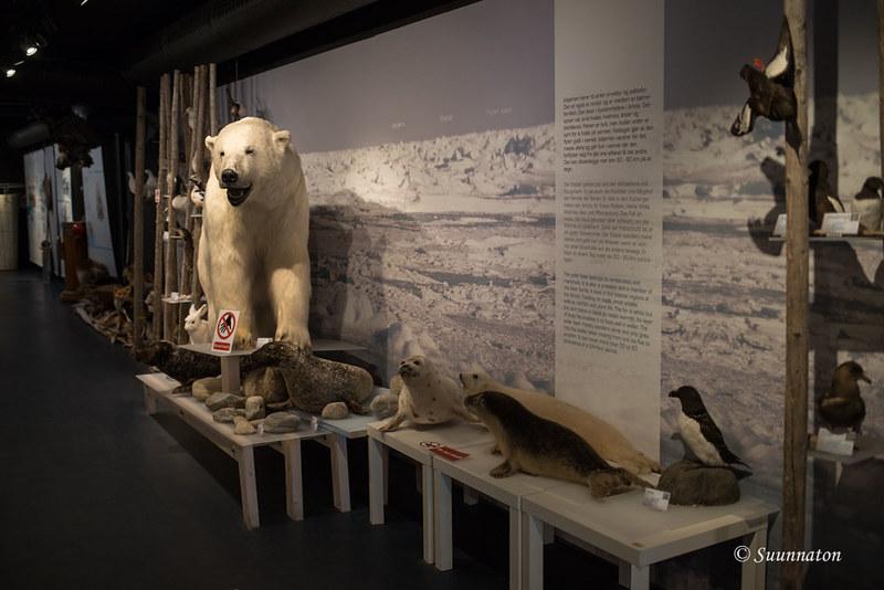 Hammerfest, museo