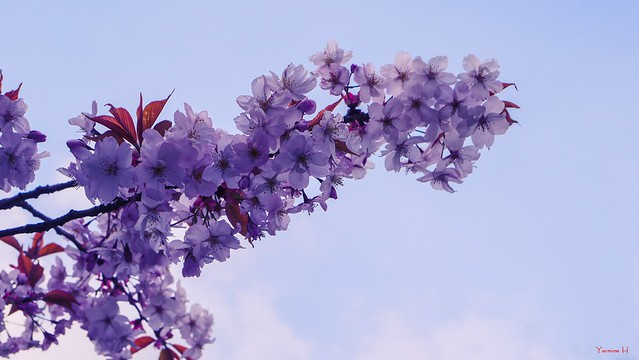 Flowers - 7273