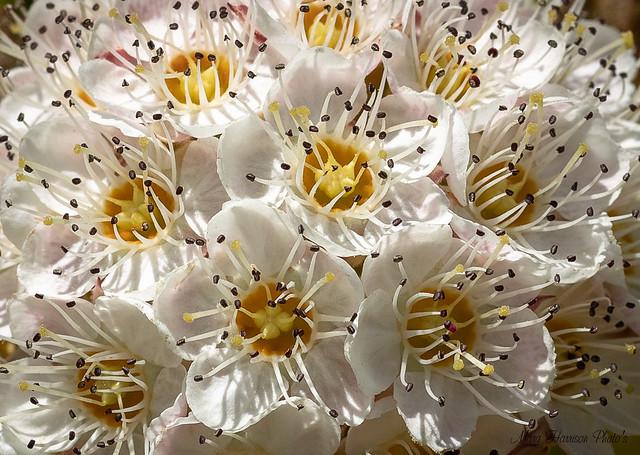 Tiny Little Florets-5137