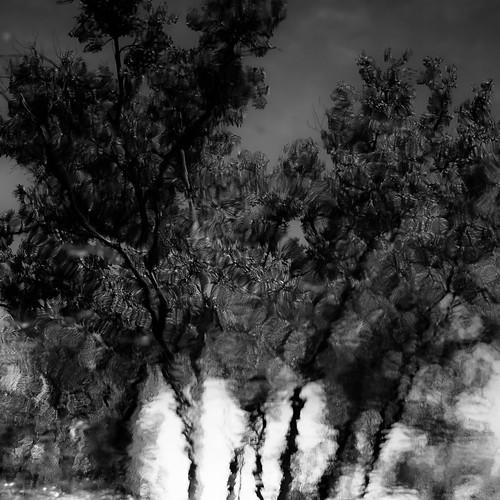 captaindanielwrightwoods d5000 desplainesriver dof nikon abstract blackwhite blackandwhite blur bw depthoffield distortion forest landscape monochrome natural noahbw reflection ripples river square summer trees water woods