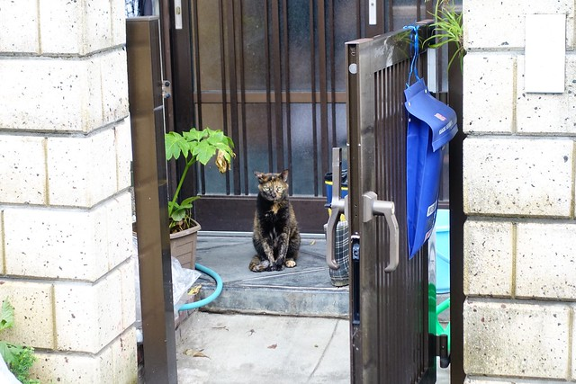Today's Cat@2019-08-21