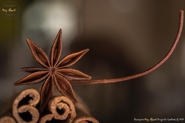 Star Anise   Macro