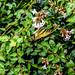 Butterfly, Hollywood Cemetery Richmond VA
