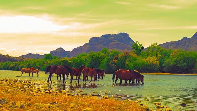 The Horses Of Salt River