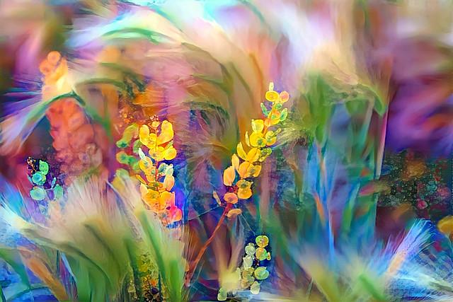 Floral colors burst