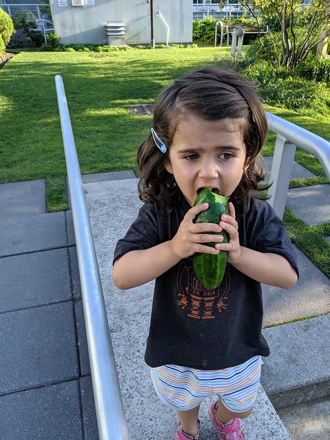 Eating Cucumbers from the Garden