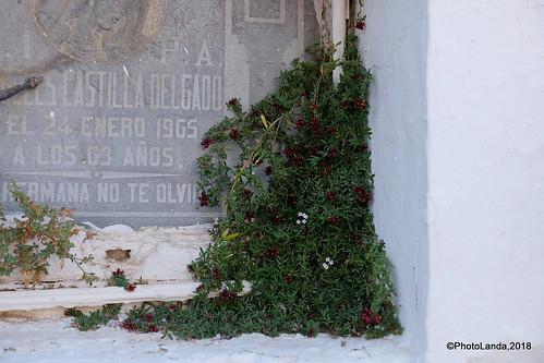 Cementerio de Pinos del Valle
