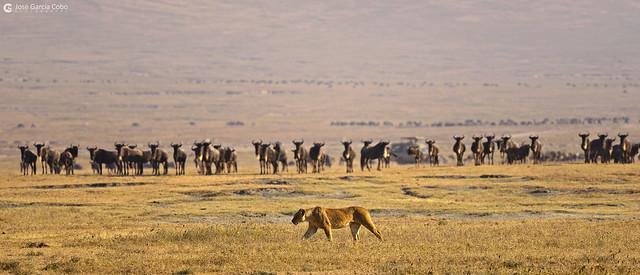 20190724 Tanzania-Ngorongoro (55) R01