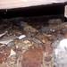 20180802 1906 - leaking crawlspace - wetness - 07061916