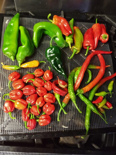 Misc. Peppers - Big Jims, Ancho, Aleppo, Superchili,  Aji Dulce, Longhorn 8-21 | by pepperhead212