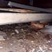 20180802 1903 - leaking crawlspace - wet corner - 32031922