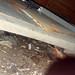 20180802 1904 - leaking crawlspace - wet corner - 29041959