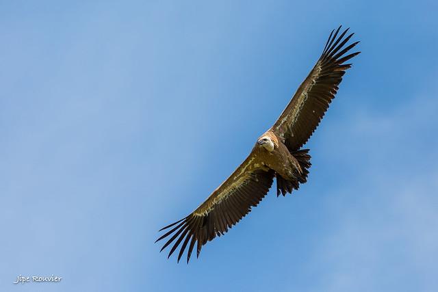Mieux vautour que jamais !!  ouai bon :)))