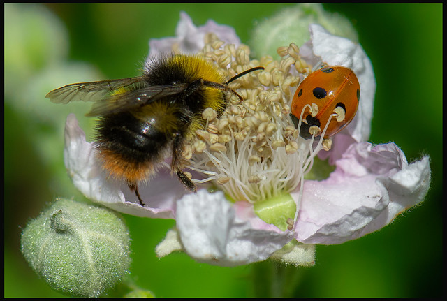 The Bee said to the Ladybird get out of my bed.