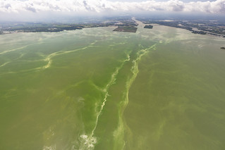 Aug 19, 2019 Lake Erie Harmful Algal Bloom | by NOAA Great Lakes Environmental Research Laboratory