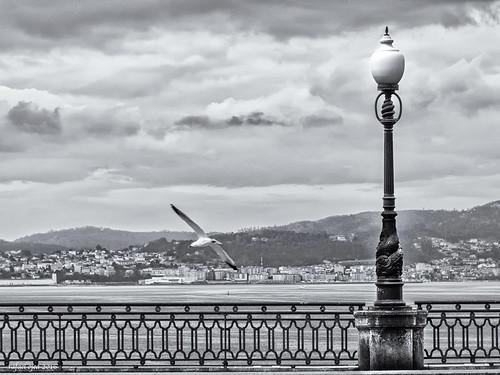 _IGP3610 Composición con baranda, gaivota e farola